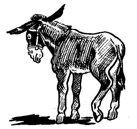 mule pic