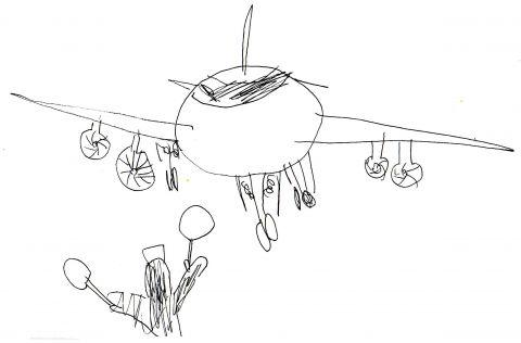 bird plane landing