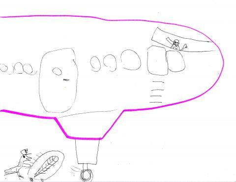 bird tues airplane landing